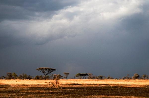 IMGP0880-Serengeti by Buutopia