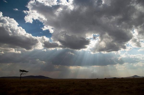 IMGP0700-Serengeti by Buutopia