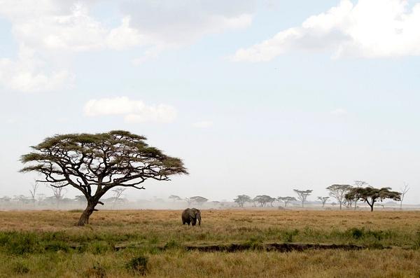 IMGP0693-Serengeti by Buutopia