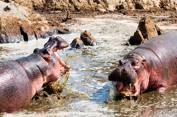 IMGP1063-Serengeti by Buutopia