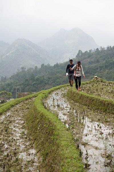 Fallow Rice Terrace by Buutopia