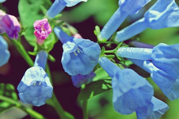Flowers by BeccaMallon