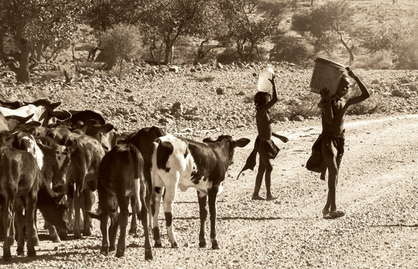 Namibian Boys with Water ad Cattle - Stuart Bacon - 2016 Showcase Competition - The Yerba Buena Chapter of the PSA