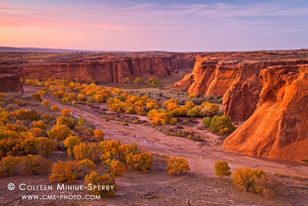 Cottonwoods at Canyon de Chelly by Colleen Miniuk-Sperry