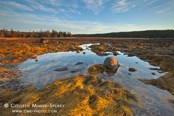 Acadia National Park-00196_c by Colleen Miniuk-Sperry
