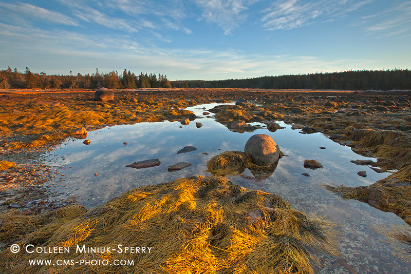 Acadia National Park-00196_c
