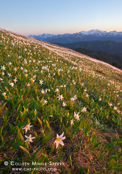 WA_Olympic National Park_00006_c by Colleen Miniuk-Sperry