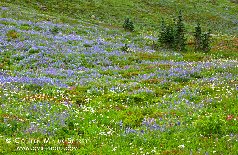 WA_Mount Rainier National Park_00004_c