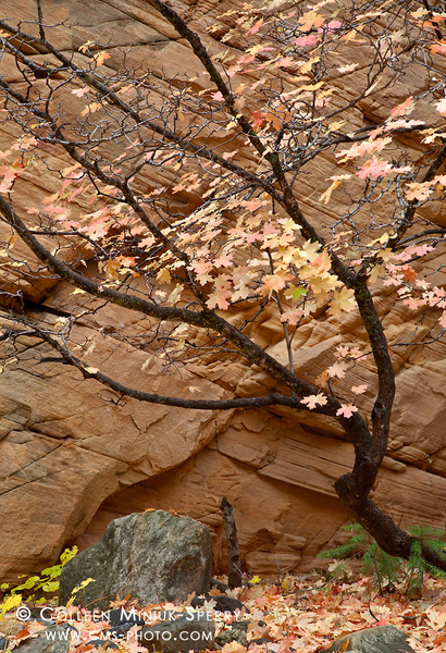 Arizona Fall Colors by Colleen Miniuk-Sperry by Colleen...