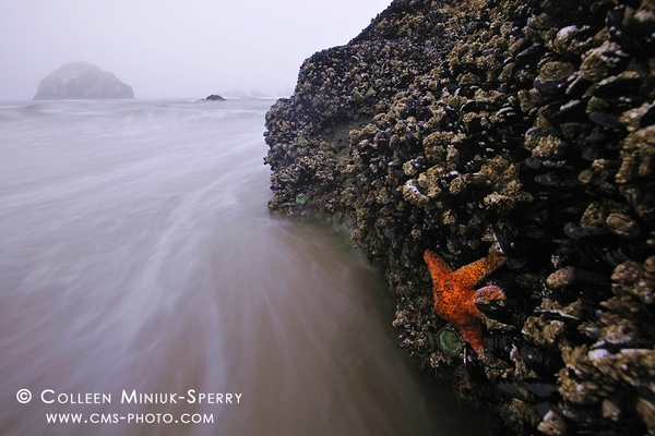OR_Bandon _00019_c by Colleen Miniuk-Sperry