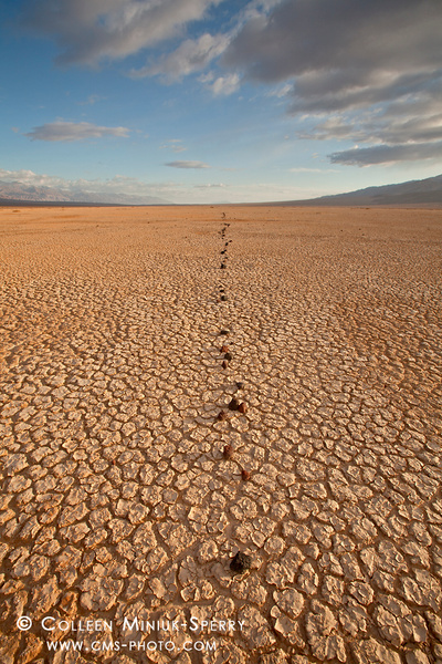 Death Valley National Park by Colleen Miniuk-Sperry