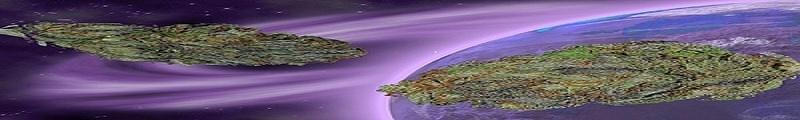 Space Herb 2