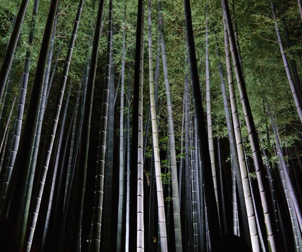 20131101I-Kyoto-Shoren-In-Monzeki-AtNight-77 by RicThompson