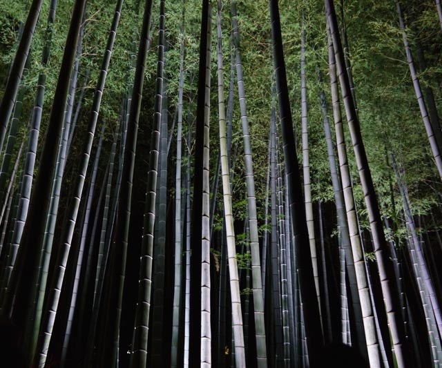 20131101I-Kyoto-Shoren-In-Monzeki-AtNight-77