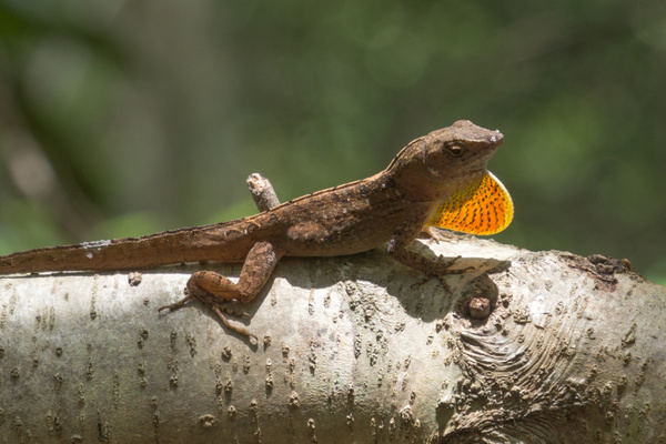 20140528-HeritagePark-Lizards-2 by RicThompson