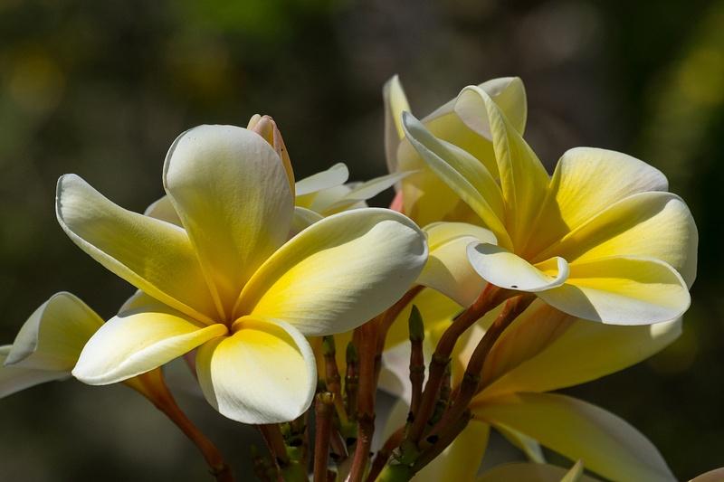 20140528-HeritagePark-Flowers-9