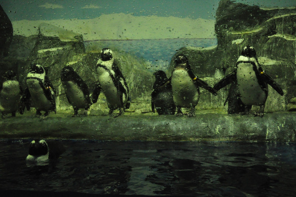 Пингвины by Vatslav