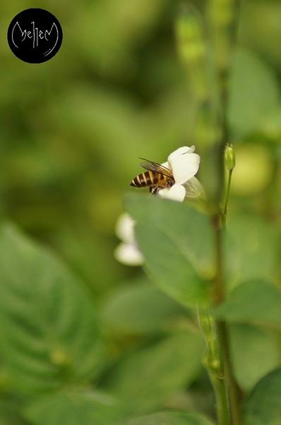 Bee's Butt