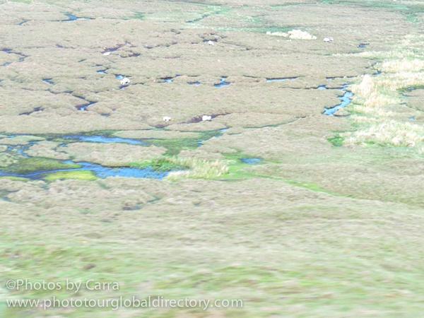 Shetland peat bogs by Carra Riley