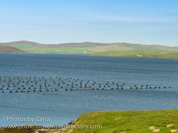 Shetland mussel farm by Carra Riley