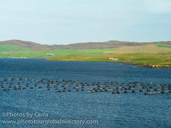 Shetland mussel farm 2 by Carra Riley