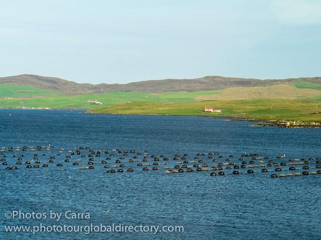 Shetland mussel farm 2