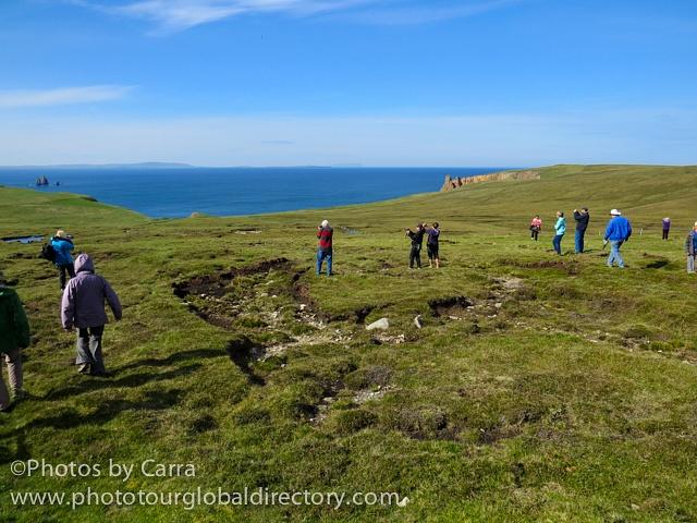 Shetland coast 7 lemmings 2