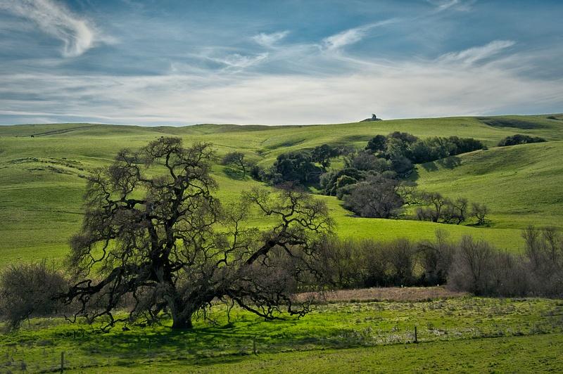 3.Oak Landscape