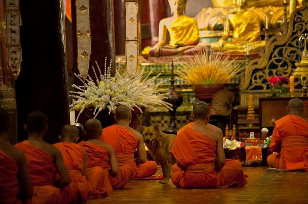 20.Monks wDog by Harvey Abernathey