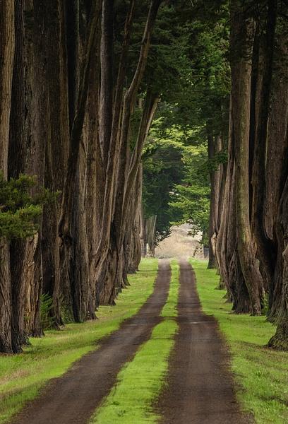 36.Cypress Road by Harvey Abernathey