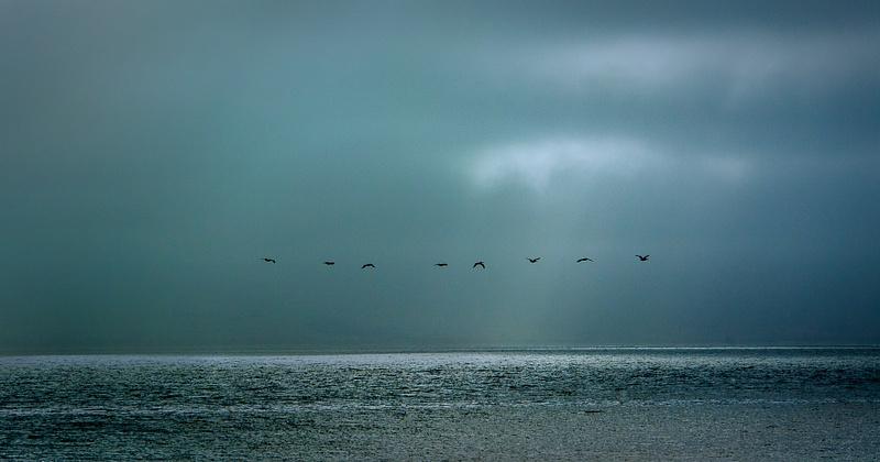 43.Pelican Flight