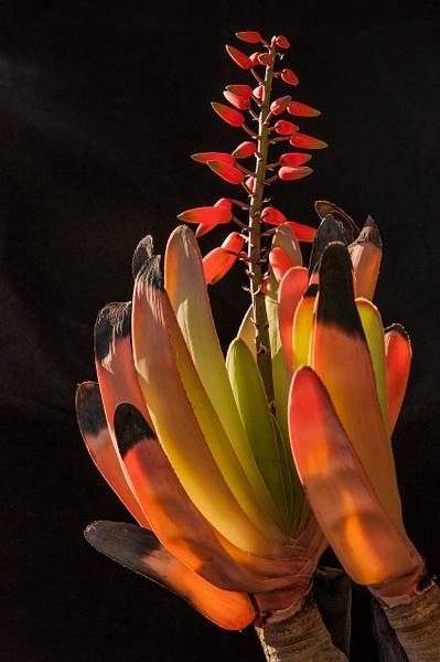 5.Nature by Harvey Abernathey