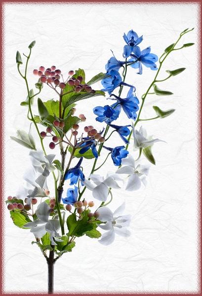 11.Red White Blue by Harvey Abernathey