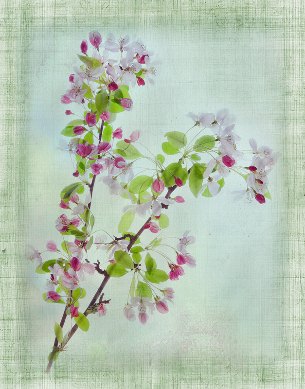 30.Cherries Texture