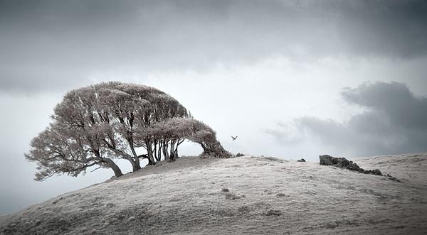 17.Kite by Harvey Abernathey