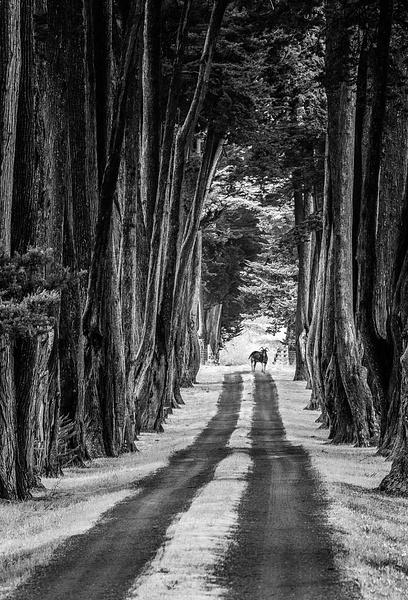 22.Cyprus Road Goat by Harvey Abernathey