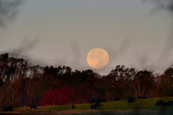 Thanksgiving moon setting by CC Robinson