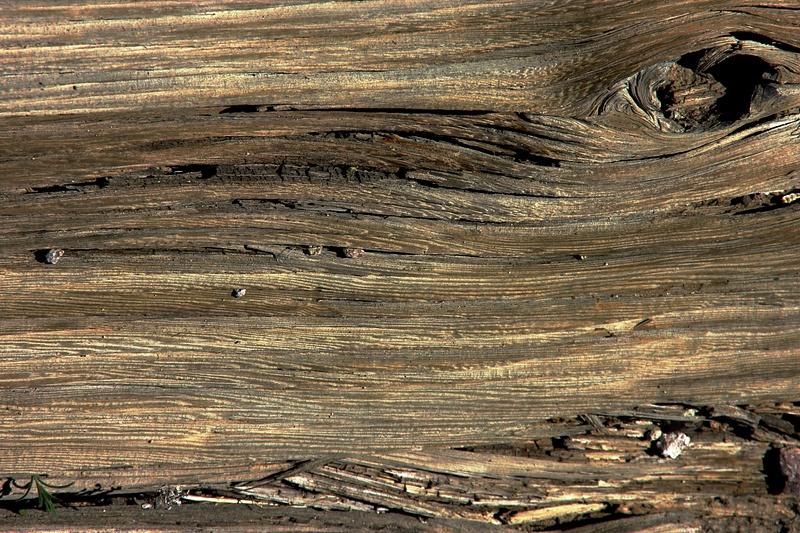 Wood-eye