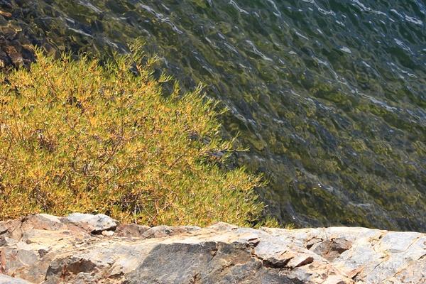 Rock, Water, Tree by JennHicks