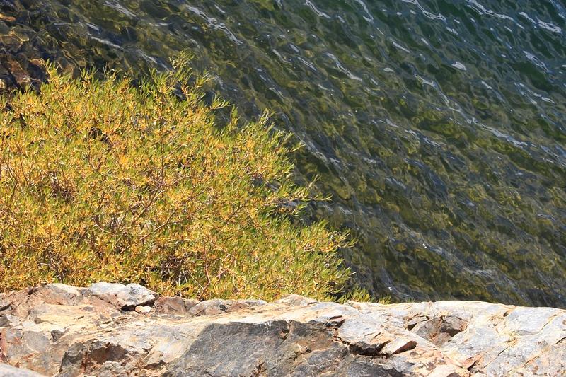 Rock, Water, Tree