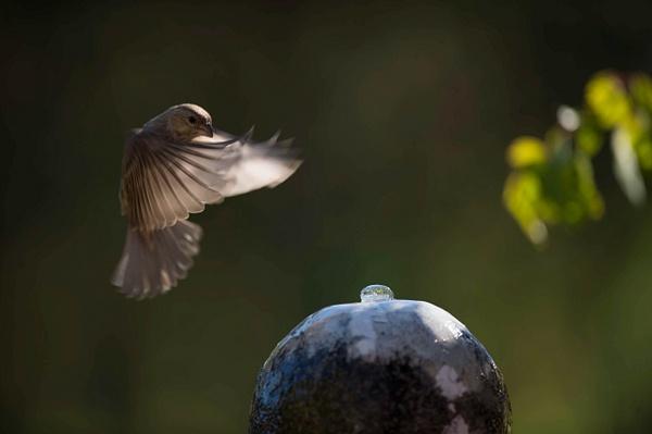 birds by David Klemp