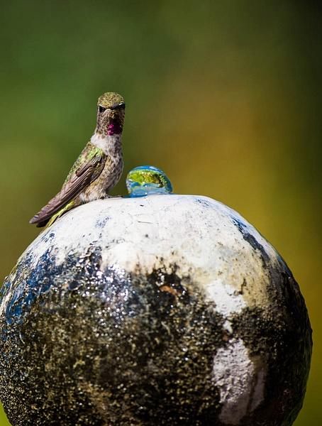 birds by David Klemp by David Klemp