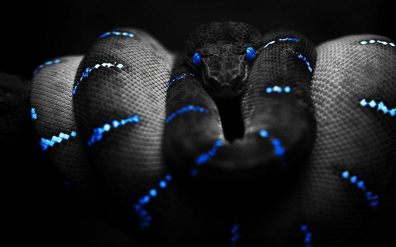 blue_black_snakes_black_background_1920x1080_wallpaper_Wallpaper_2560x1600_www.wall321.com