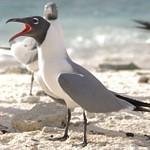 Birds from Bonaire