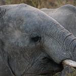 SOUTH LUANGWA Zambia 2013