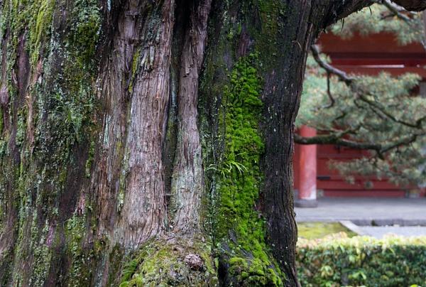 DAITOKUJI Kyoto 2018 by Greg Vickers by Greg Vickers