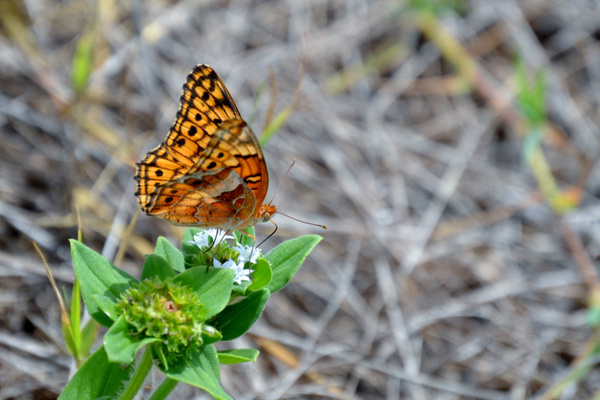 Butterfly by GeorgeGasperson