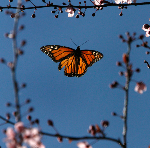 Monarchs of Pacfic Glove by FLarson