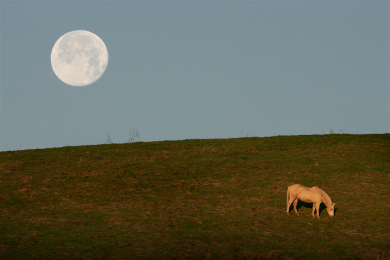 Moonset on Horse Hill