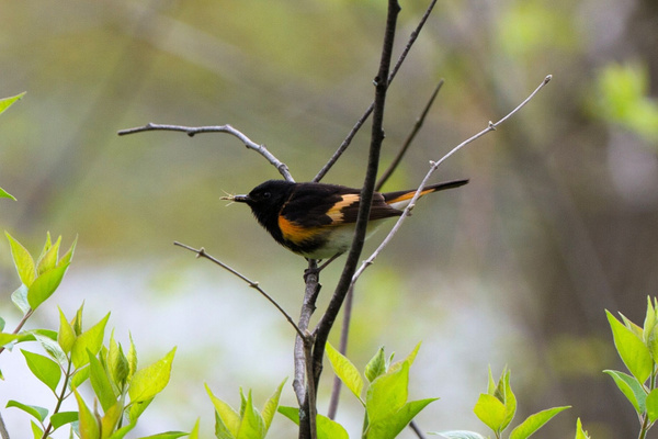 2014 Spring Migration by DavidAWelch